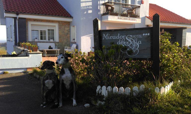 Perros en la entrada del Hotel